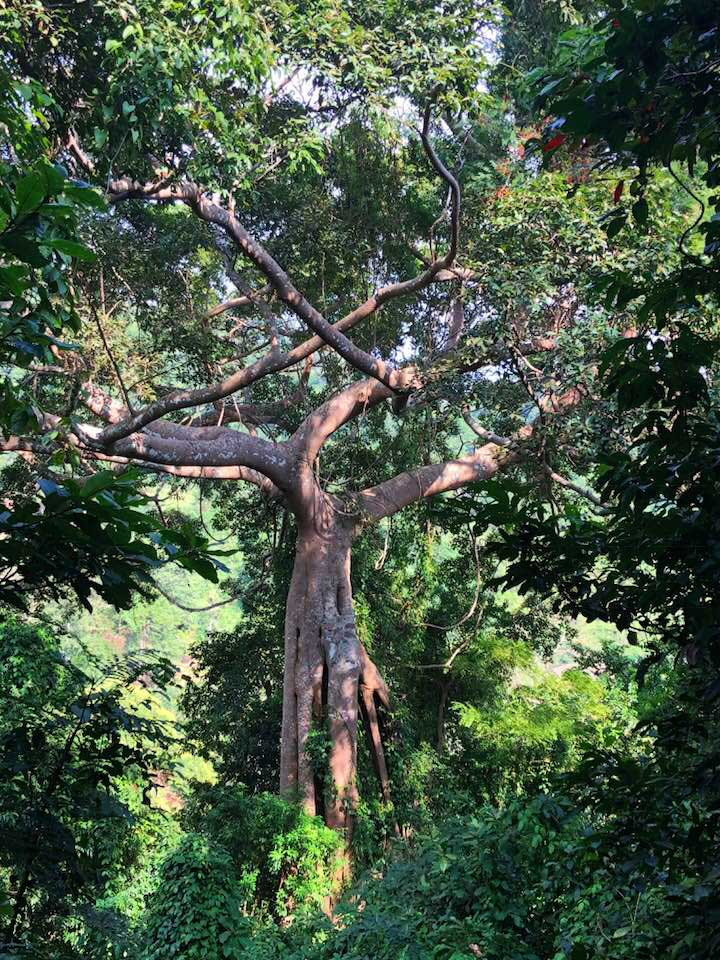 Remarkable-Tree-Kep