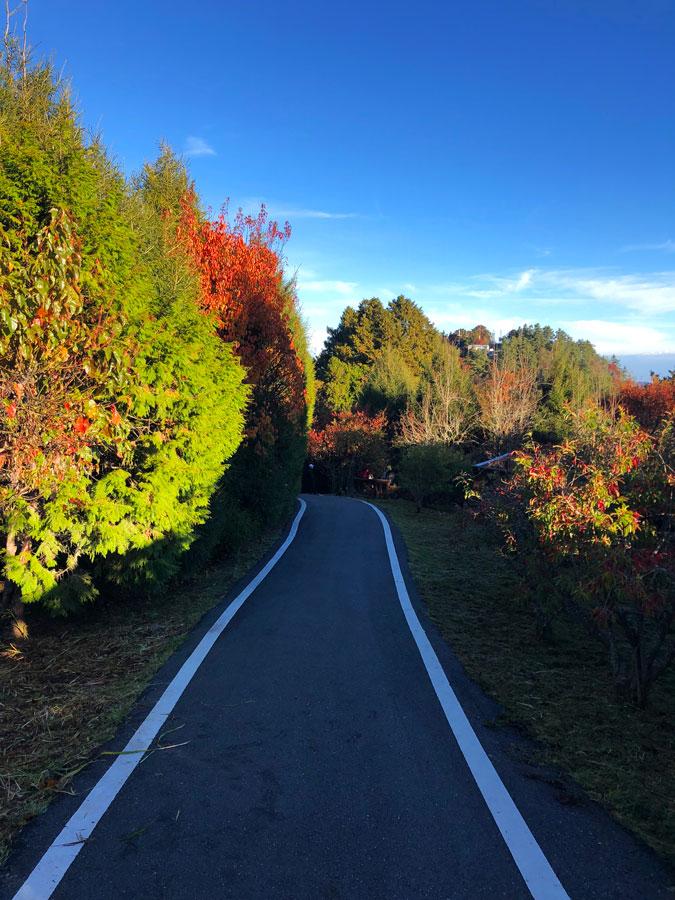 Alishan-gekleurd-landschap