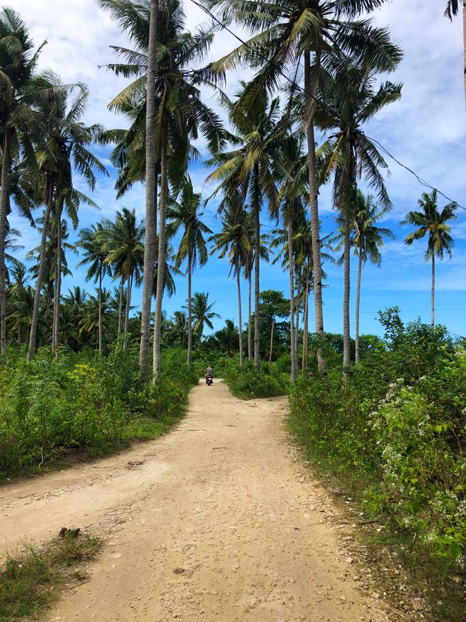 Bantayan-palmbomen