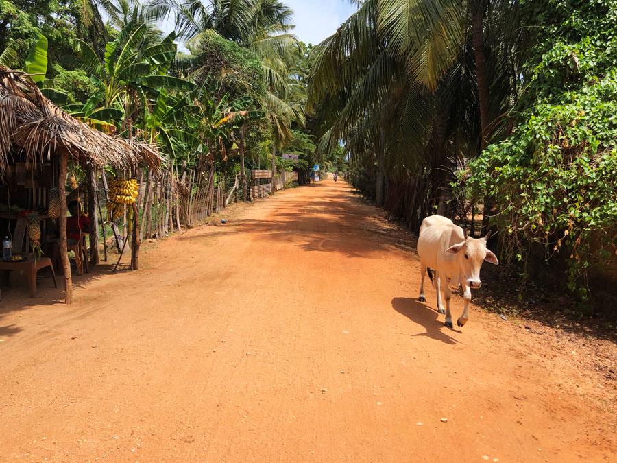 Nilaveli-koe