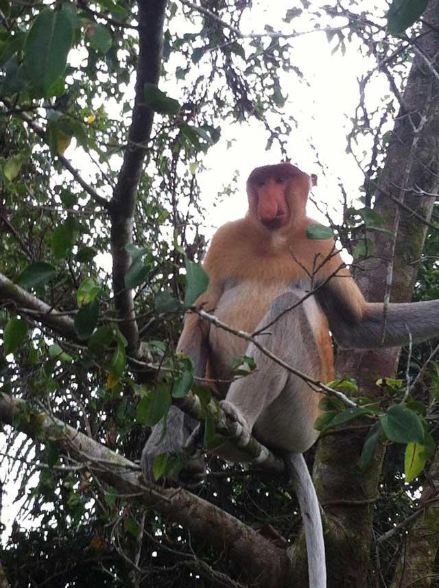 Proboscis-Monkey-Sanctuary-buiten