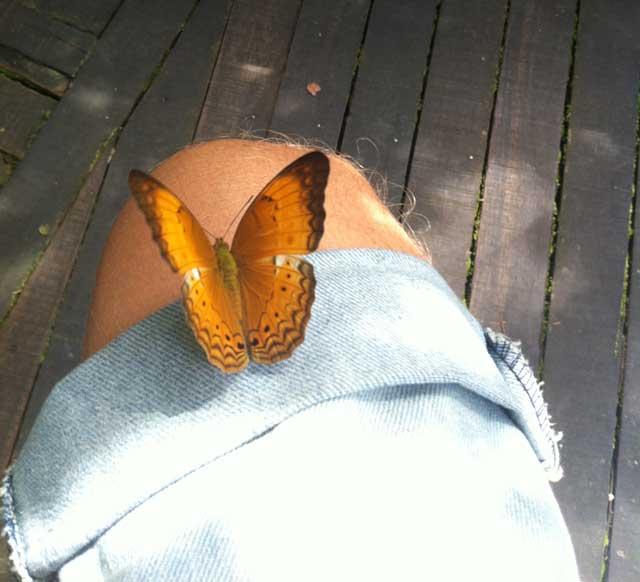 Vlinder Orang Utan Rehabilitation Centre