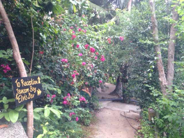 Als je naar Sai Nuan Beach loopt via Mae Haad, kom je langs dit soort natuurrijke omgevingen