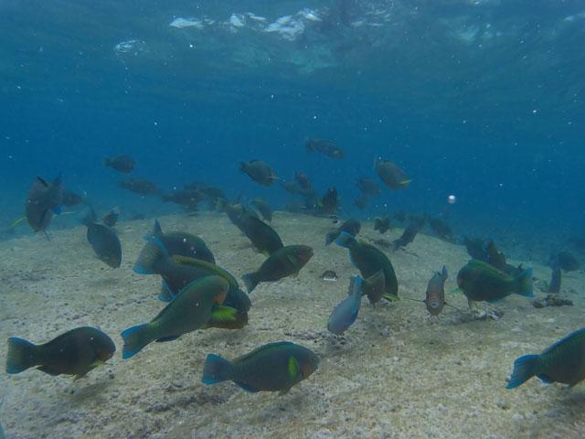 koh-nang-yuan-snorkelen-2