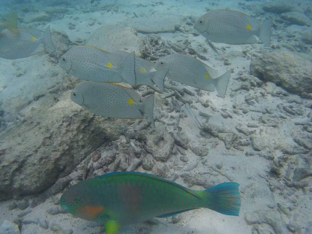 koh-nang-yuan-snorkelen