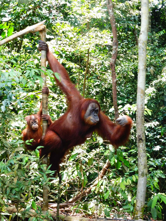 Gunung-Leuser-National-Park