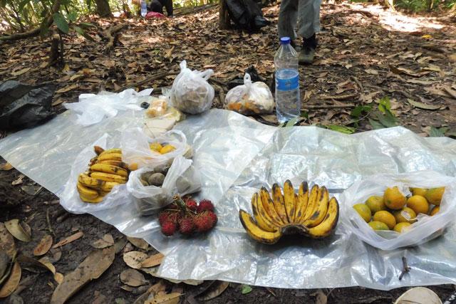 Vers fruit Bukit Lawang