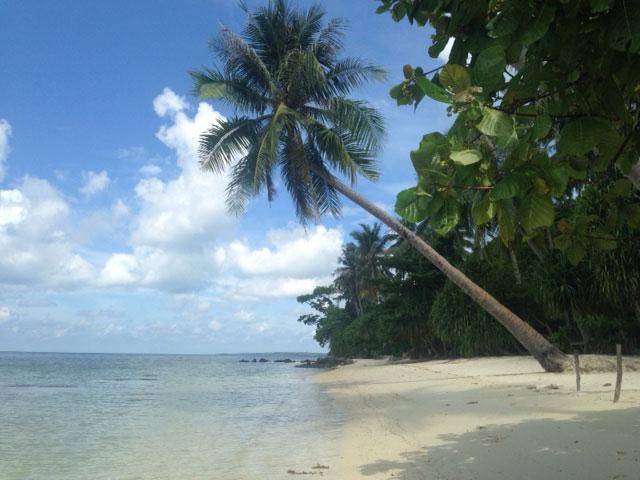 De iconische palmboom die over het water hangt