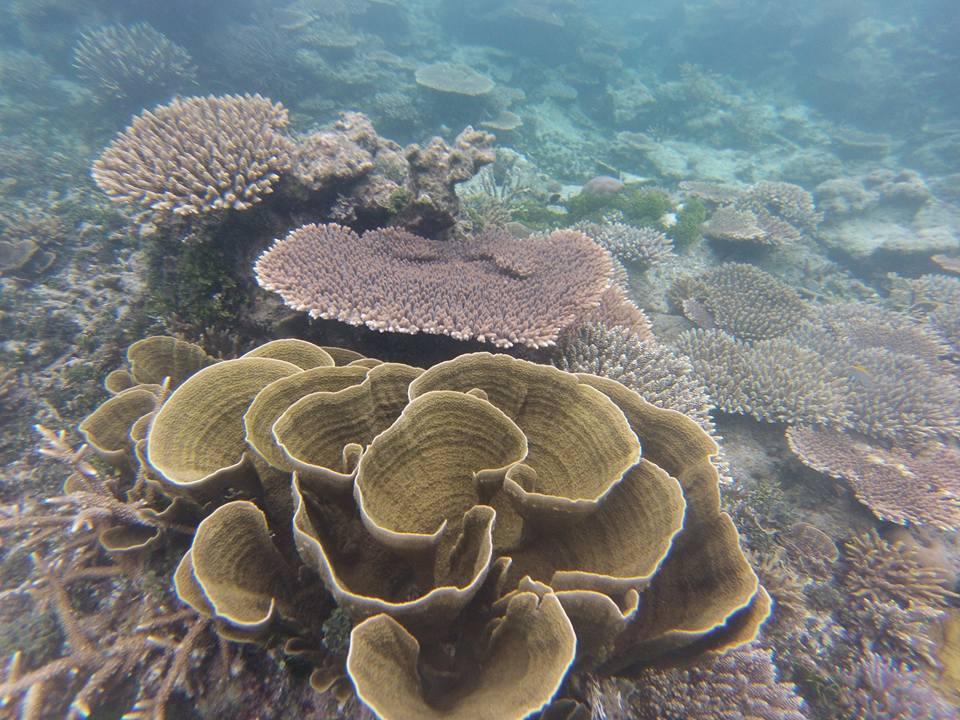 karimunjawa-koraal-2