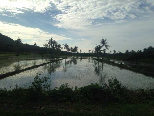 Rijstvelden-Karimunjawa