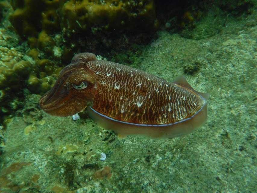 Snorkelen-Koh-Hin-Ngam-Noi-4