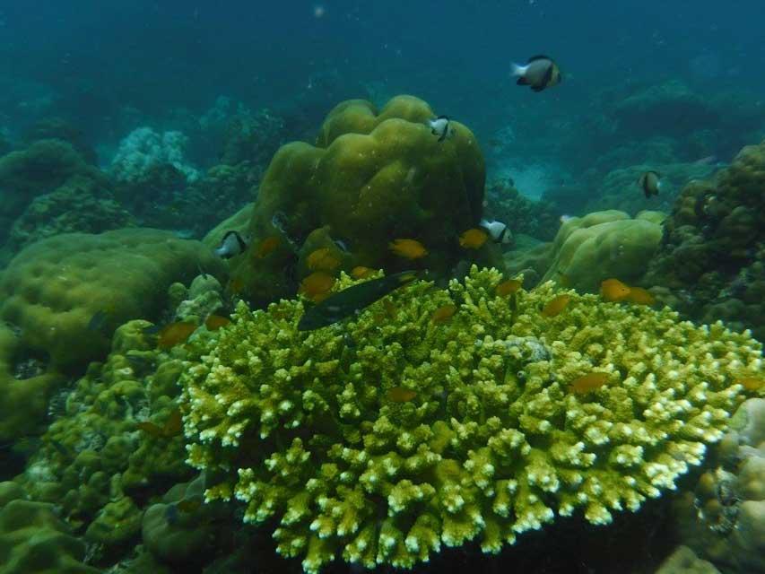 Snorkelen-Koh-Hin-Ngam-Noi-7