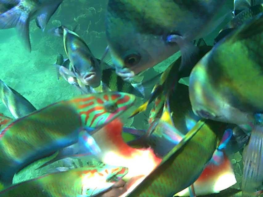 Snorkelen-Koh-Yang-2