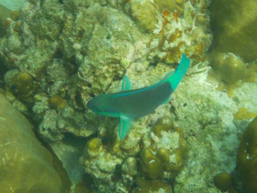 Snorkelen-Koh-Yang-5
