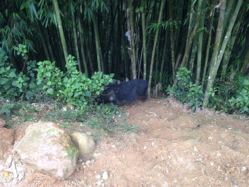 Sapa-bamboebos