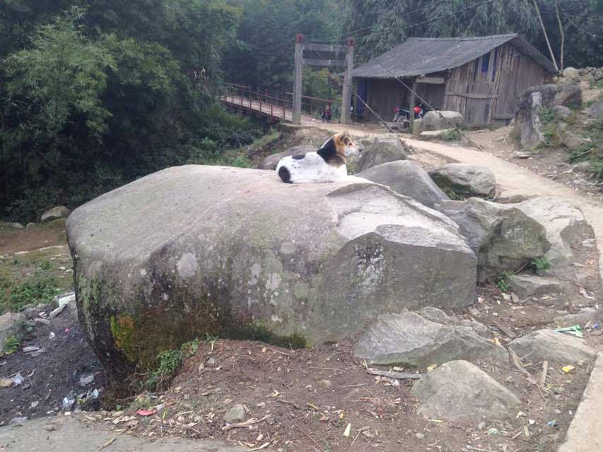 Sapa-slapende-hond