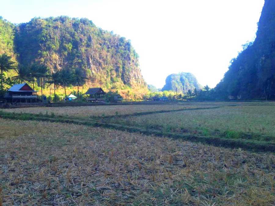 Kampung-Berua-rijstvelden