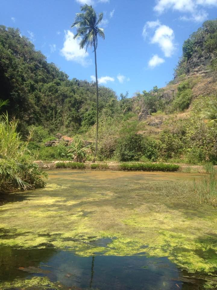 Rammang-Rammang palmboom