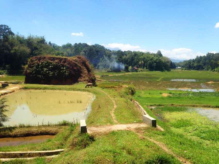 Toraja-rijstvelden