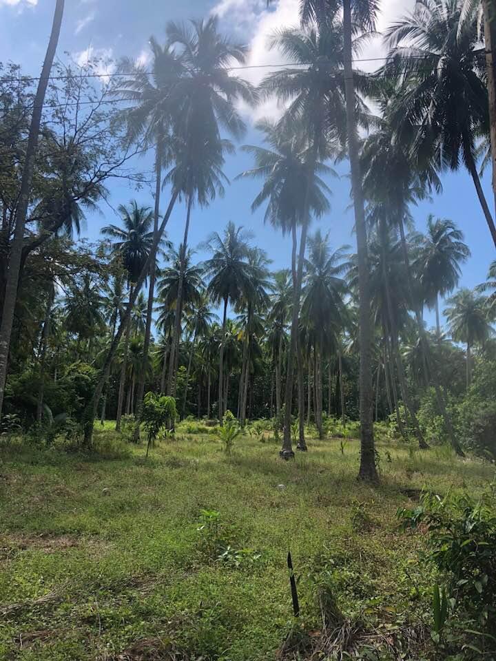 Palmbomen Koh Yao Noi