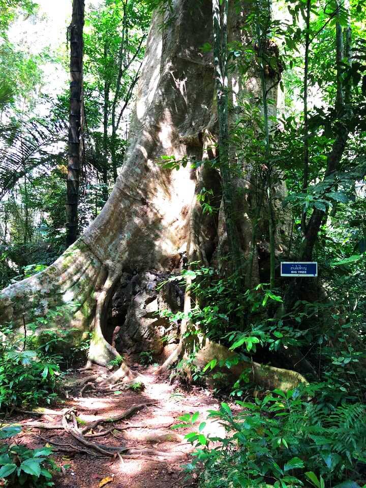 Tiger-Cave-Tempel-Wonderland-big-tree