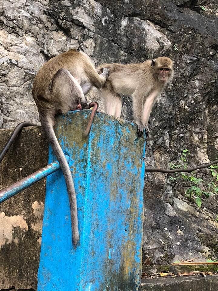 Tiger Cave Tempel aapjes