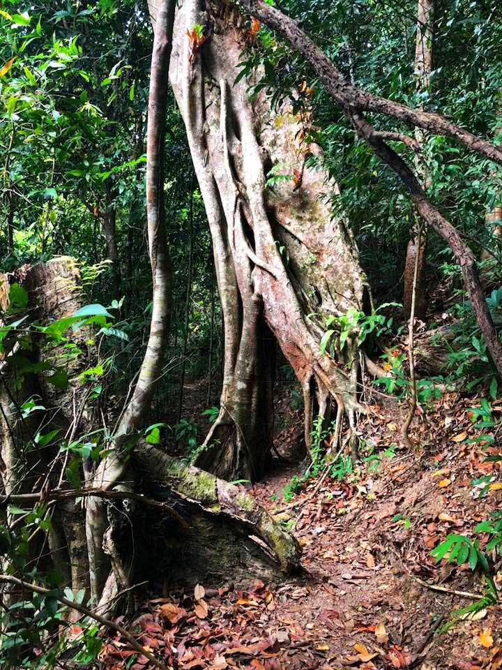 Kep-National-Park-boom