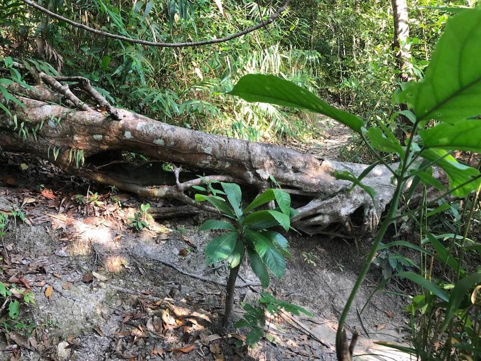 Kep National Park obstakel