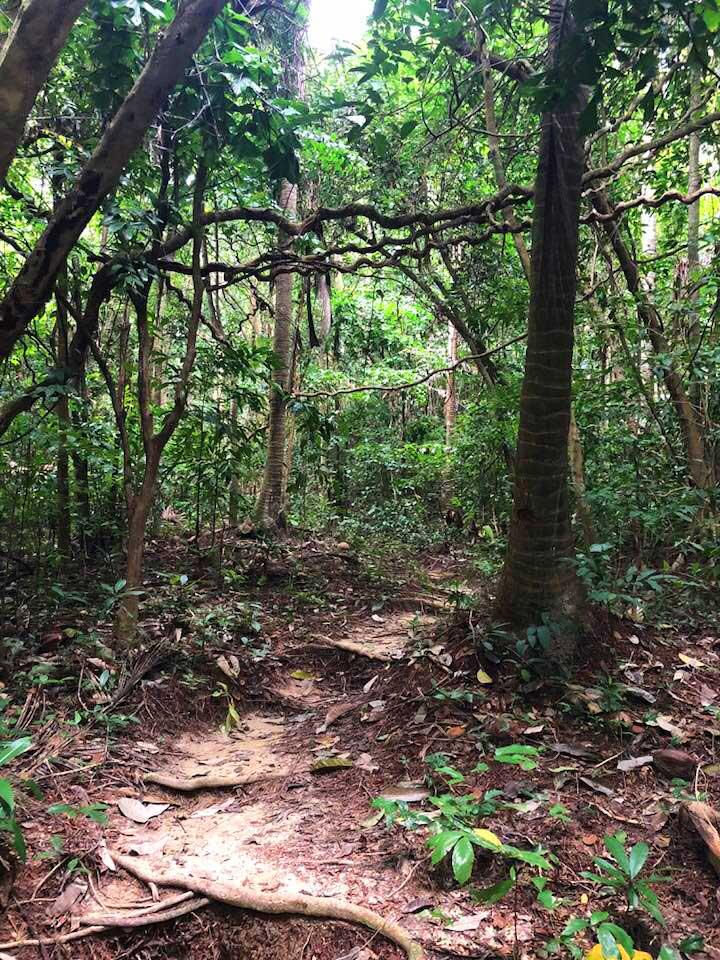 Koh-Ngai-jungle