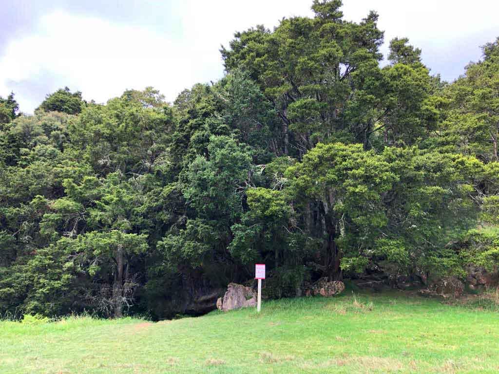 Waipu-Caves-ingang