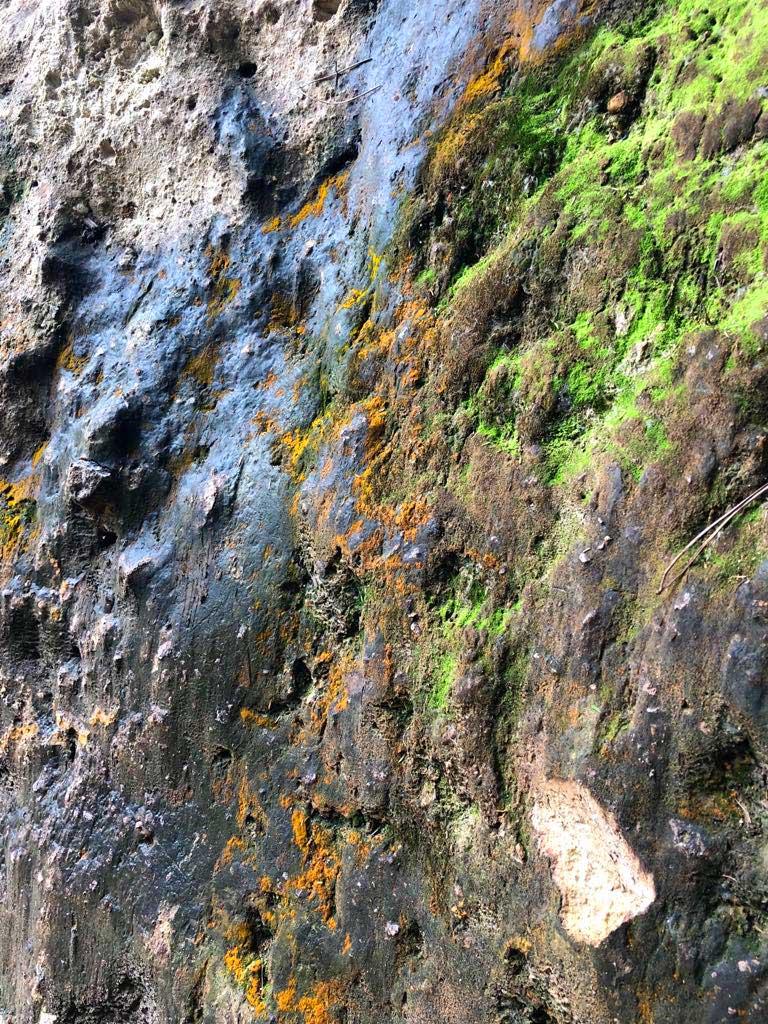 Waiotapu-gekleurd-mos