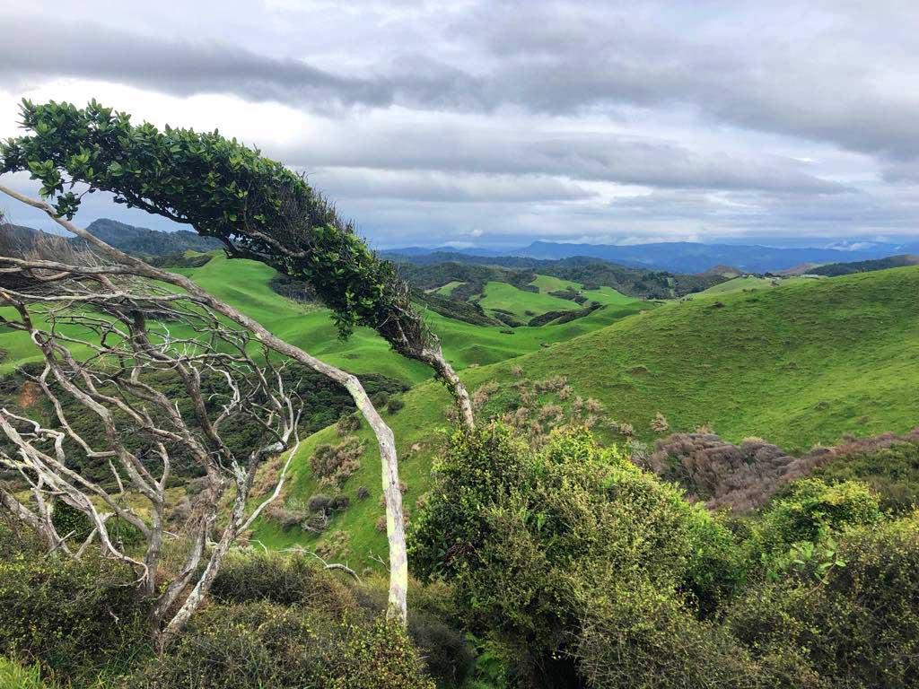 Green-Hills-Track-bijzondere-bomen