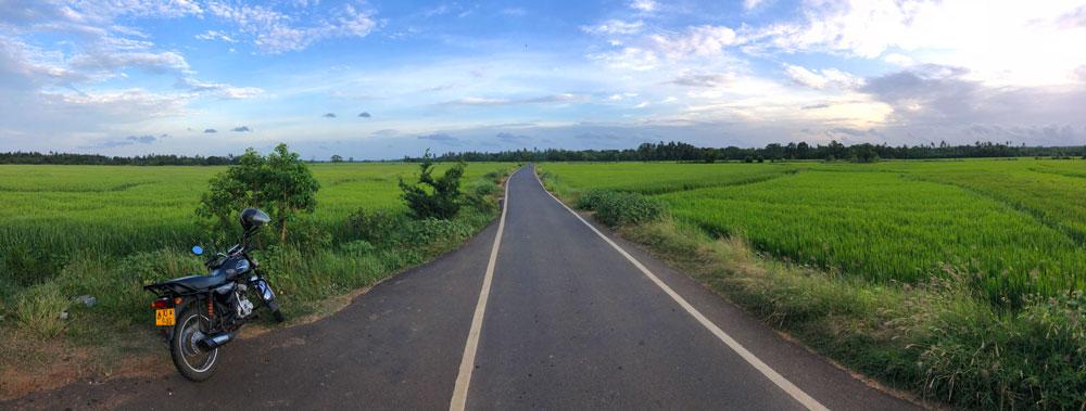 Tangalle-rijstvelden