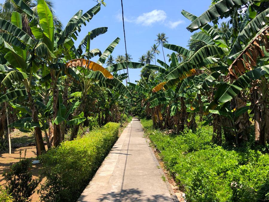 Pulau-Hatta-weg-naar-kamung-Bara
