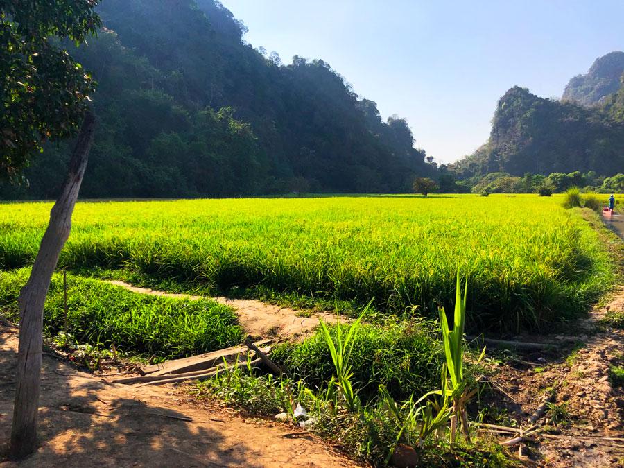 Sadan Cave rijstvelden