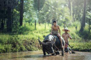 Laos landbouw