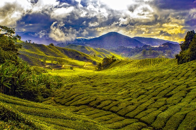 Cameron-Highlands-Maleisie