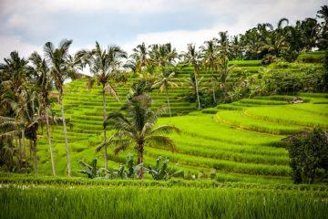 Jatiluwih-rijstvelden-Bali