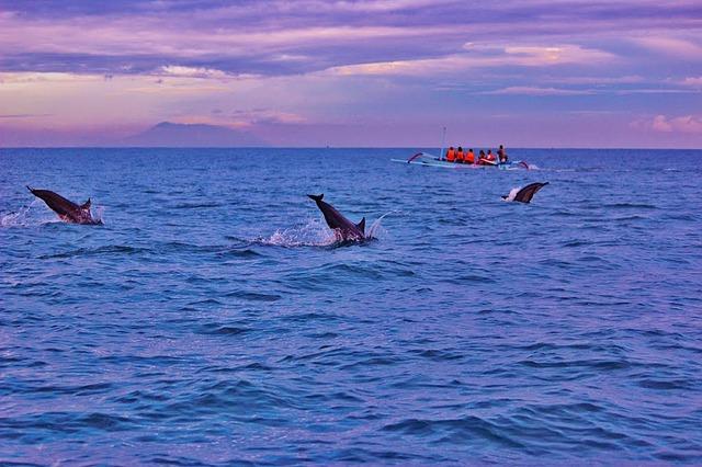 Dolfijnen in Lovina